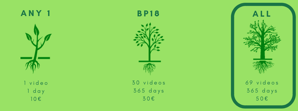 BP Translation Conferences video offer